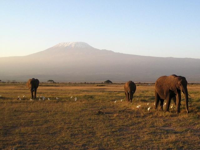 夕暮れとアフリカ象