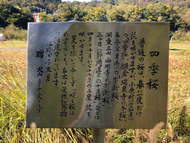 栗栖園地の四季桜の看板
